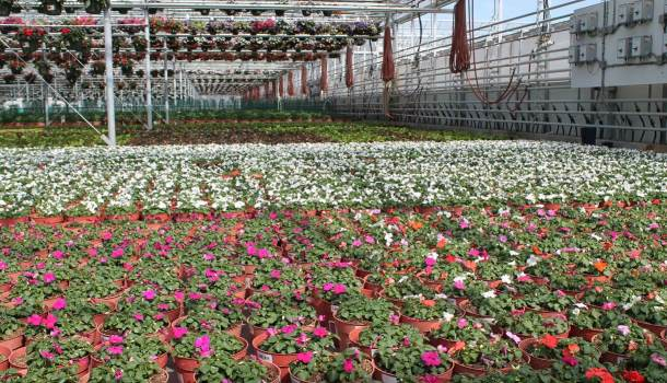 A Changing Landscape For Greenhouse And Nursery Growers